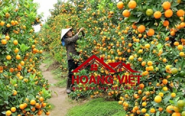 """Vườn trái cây Trung An Củ Chi luôn là điểm đến """"hot"""" trong mùa hè nóng nực với 30 đến 50 nghìn lượt khách đến thăm quan mỗi năm bởi không gian vô cùng mát mẻ và yên tĩnh"""